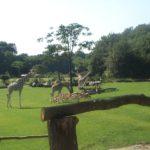 Zoos und Tierparks in Sachsen