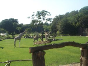 Zoo Leipzig - Afrika-Gehege