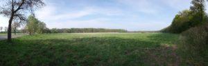 Teil der Hofewiese in der Dresdner Heide