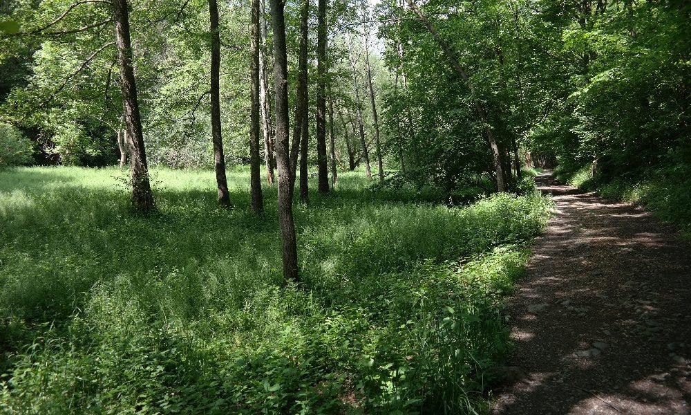 Syratal - Ein Spaziergang durch Plauens Naherholungsgebiet