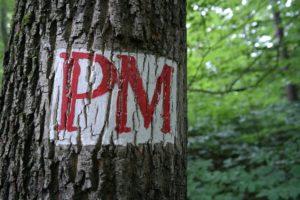 Wegzeichen des Pillnitzer Moritzburger Weg in der Dresdner Heide
