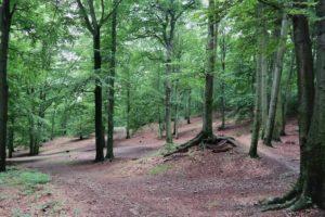 Wegekreuzung in der Dresdner Heide