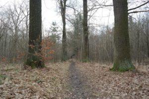 Weg in der Dresdner Heide
