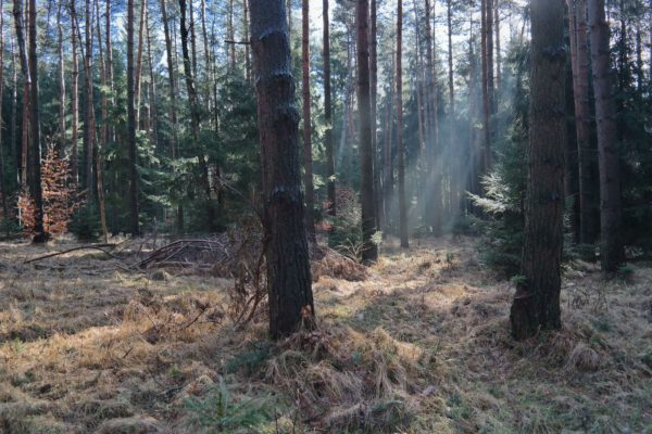 Morgens in der Dresdner Heide