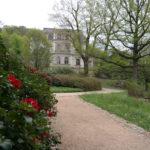 Der Rhododendronpark in Wachwitz - Die Blütezeit ist gekommen.