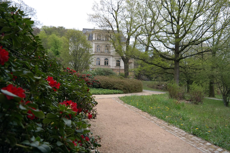 Rhododendronpark Dresden-Wachwitz