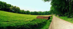 Wildwiese in der Sächsischen Schweiz