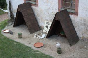 Greifvögel der Greifvogelshow auf Schloss Augustusburg