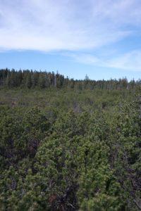 Die Vegetation im Hochmoor Kleiner Kranichsee