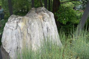 Urzeitbäume im Botanischen Garten