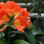 Botanischer Garten Dresden - Florale Raritäten.