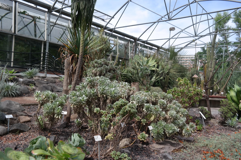 Botanischer garten dresden florale rarit ten - Sukkulenten garten ...