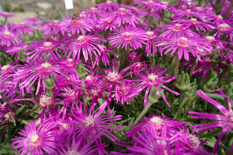 Botanischer Garten Dresden Florale Raritäten