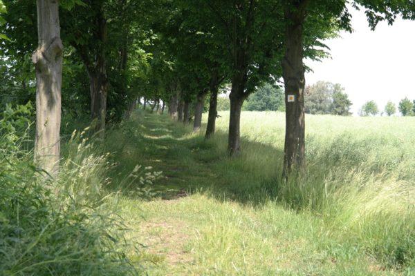 Weg ins Seifersdorfer Tal