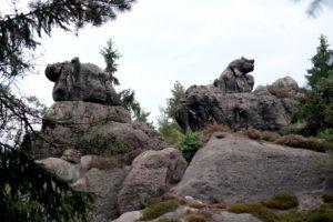 Bernhardiner und Nashorn