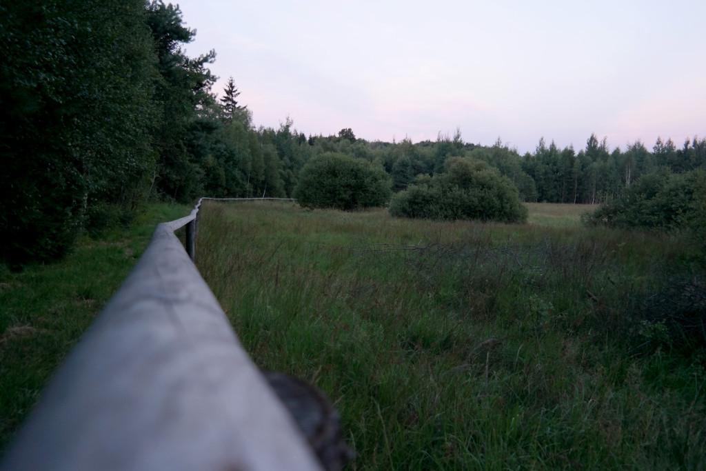 Dämmerung im Lauschemoor