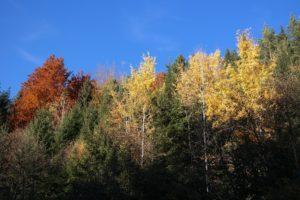 Herbstfahrt am Mulderadweg