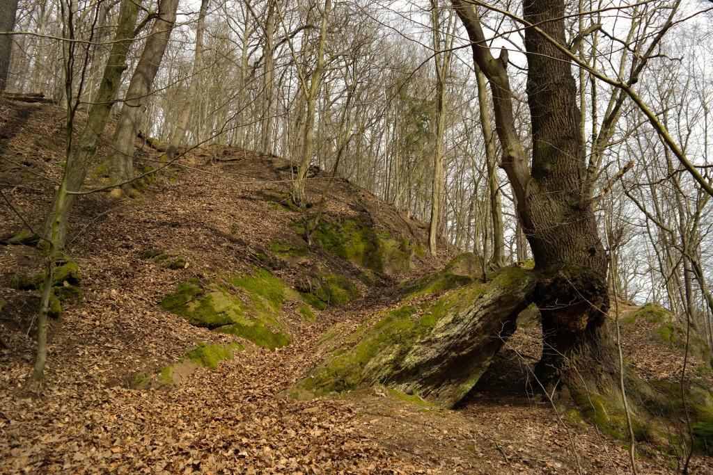 Im Rochlitzer Wald