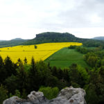 Im Gebiet der Steine - Eine kleine Runde vom Pfaffenstein auf den Quirl