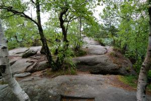Baumvegetation auf dem Pfaffenstein