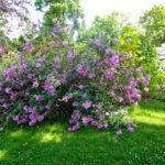 Botanischer Garten Leipzig - Vier Mal Natur pur.