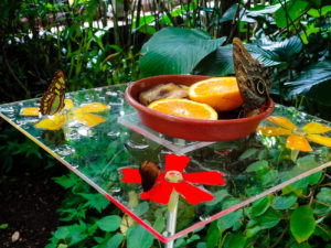 Schmetterlinge im Gewächshaus des Botanischen Garten Leipzig