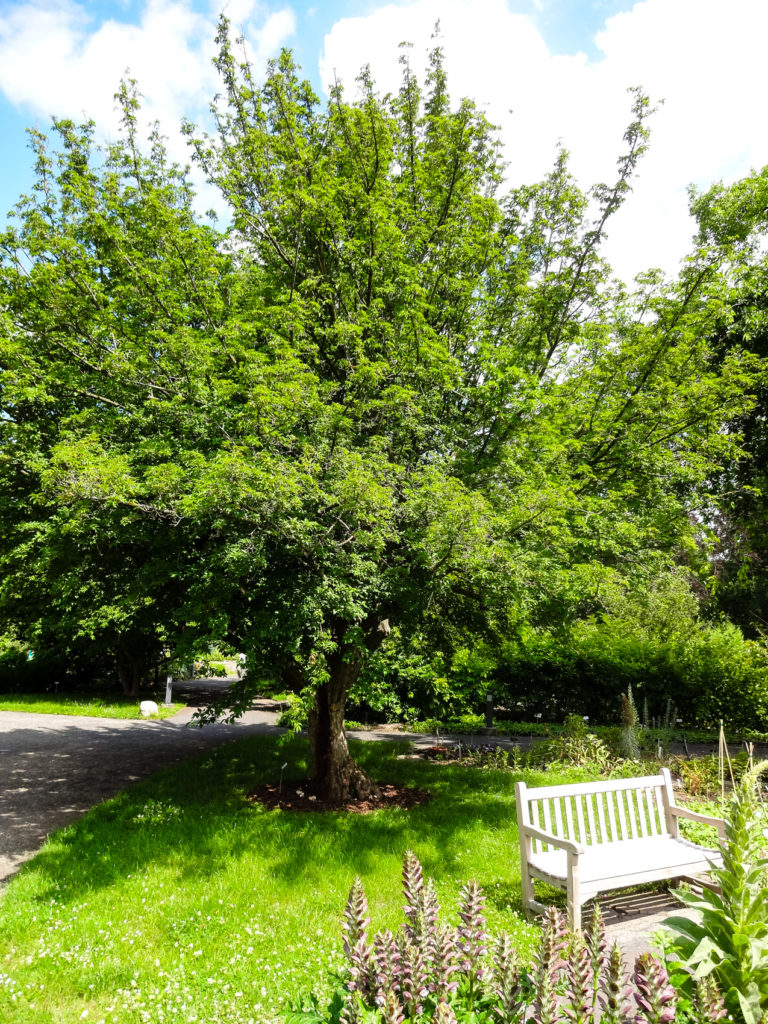 Ruheoase im Botanischen Garten Leipzg