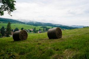 Wiesen in der Sächsischen Schweiz