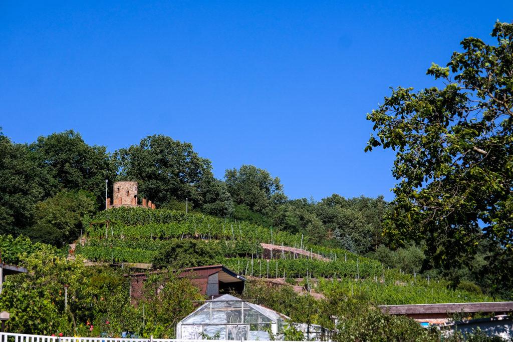 Der Wartturm in Weinböhla