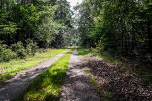 Auf dem Weg zum Wildenhainer Bruch in der Dübener Heide