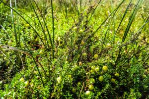 Pflanzen am Zabeltitzbruch
