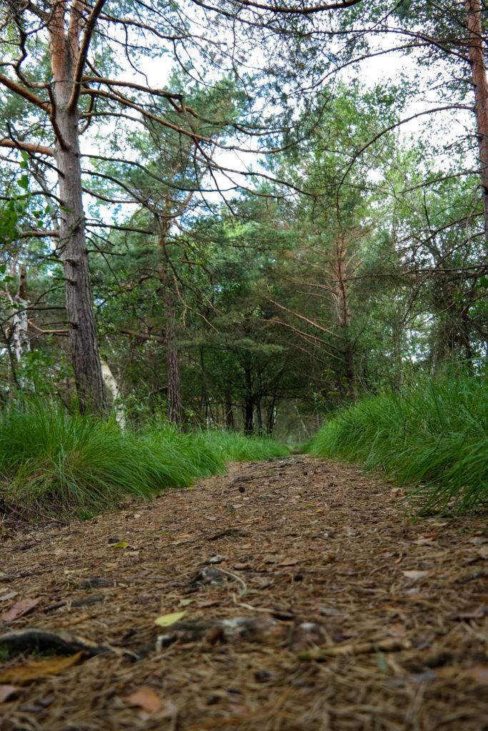 Pfad am Zabeltitzbruch in der Dübener Heide
