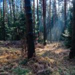 Unterwegs im Geologischen Freilichtmuseum Tharandter Wald