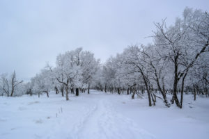 Der Weg ins Winterparadies