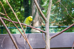 Sittich im Tierpark Eilenburg