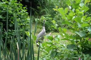 Reiher im Eilenburger Tierpark