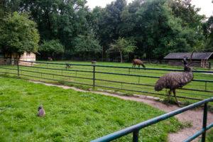 Emu, Pony, Esel und Hase im Eilenburger Tierpark
