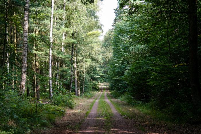 Weg im Wermsdorfer Forst