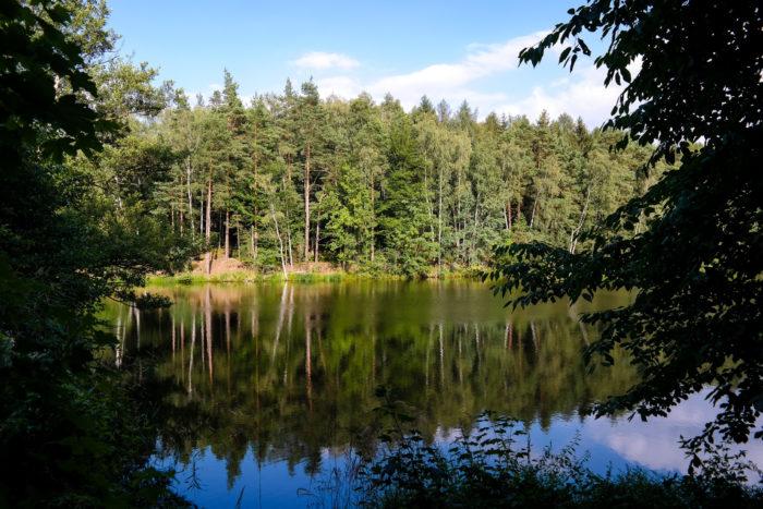 Blick auf die Drei Teiche im Wermsdorfer Forst