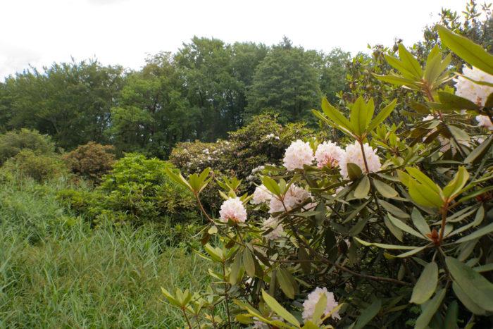 Die Rhododendronschlucht im Kromlauer Park