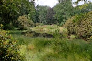 Inselteich im Kromlauer Park