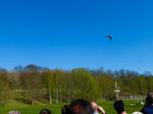 Flugshow in der Falknerei Herrmann
