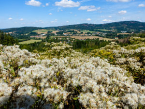 Blick auf Cunewalde und den Czorneboh