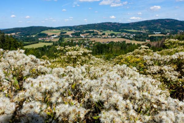Blick auf Cunewalde