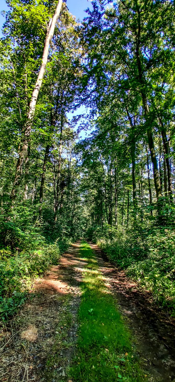 Im Wald des Löbauer Bergs