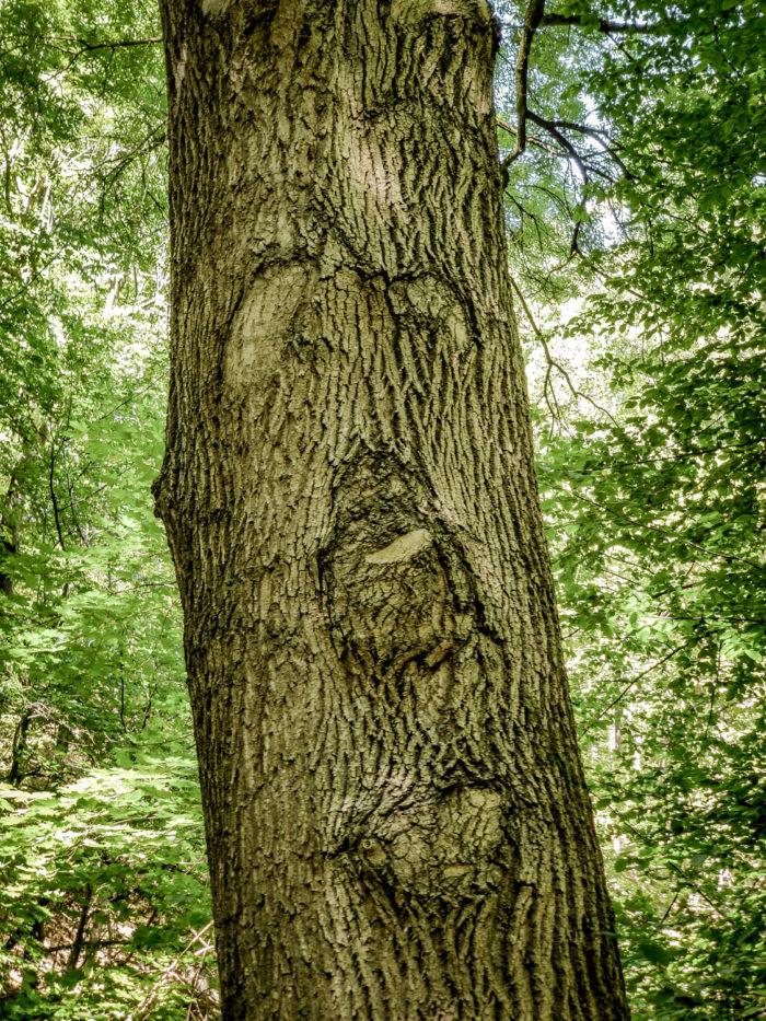 Die Bäume sprechen zu mir