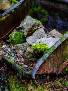 Die Natur erorbert sich den Steinbruch zurück