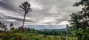Einsamer Baum in den Königshainer Bergen